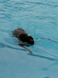 01.09.2019 - Hundeschwimmen